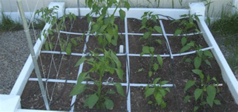 Garden Spacing by Plant Spacing My Square Foot Garden