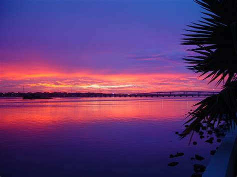 daytona beach halifax river tropical palm tree sunset