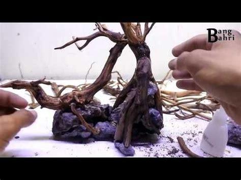 membuat akar  aquascape akarkua