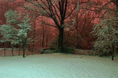 Snowy Nights In Big Backyard by February 2012 Howard Owens