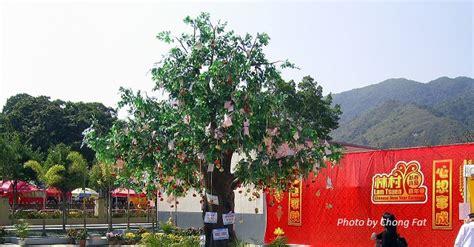 lam tsuen wishing tree new year lam tsuen wishing tree hong kong travel guide