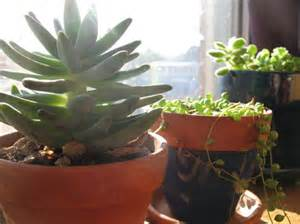 Potting Indoor Plants caring for your potted plants during winter belle flora