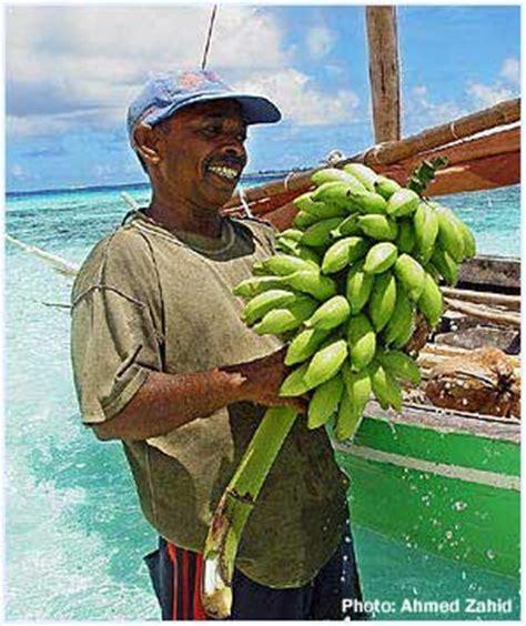 agricultural equipment manufacturer in maldives presentation on emaze