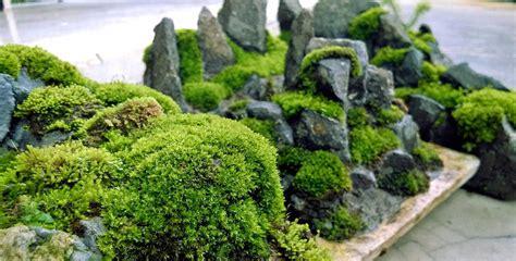 grow   moss garden    mosses