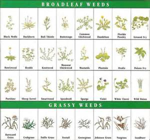 unkrautbestimmung garten identification chart simple guide midwest
