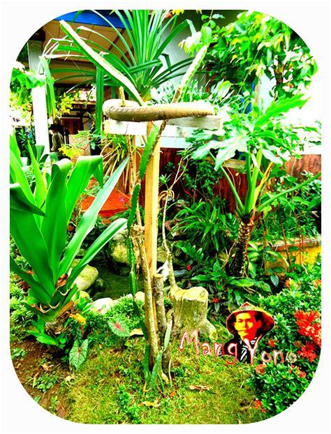 Bibit Tanaman Buah Naga mengagumkan ini manfaat buah naga yang jarang diketahui