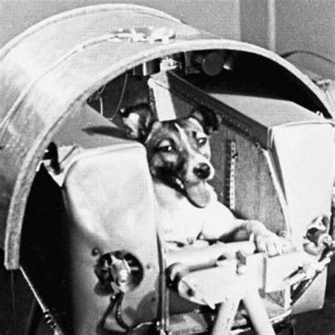 story  laika   dog  space