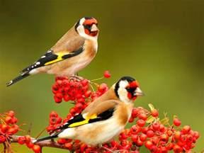 Beaitful beautiful birds wallpapers free download live hd