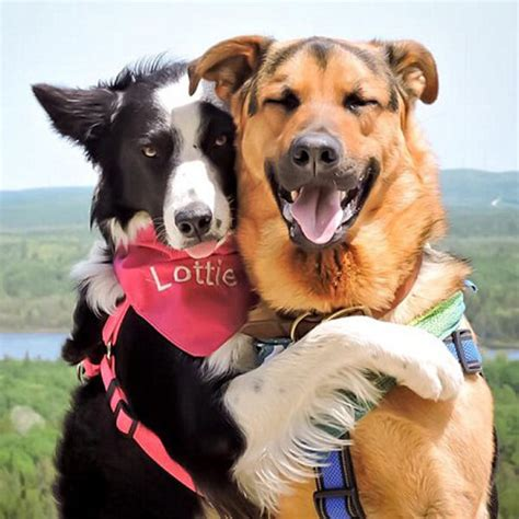 do dogs like hugs pet collars suppliers news of pet collars exhibitions breed tips qqpets