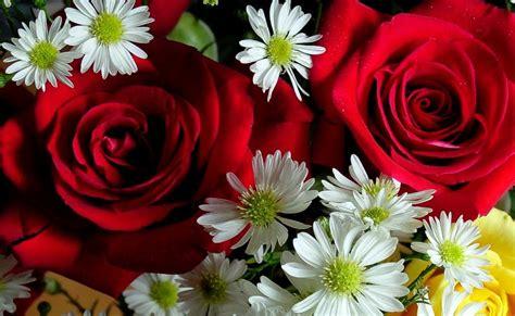 immagini fiori desktop immagini di fiori per desktop