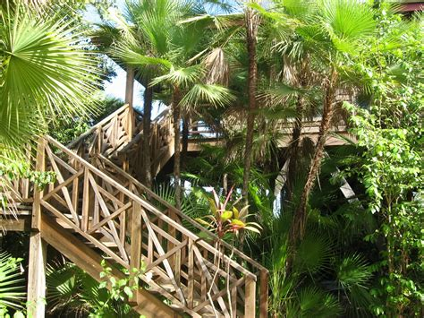 tropical treehouse vacation hamanasi adventure dive resort reviews specials