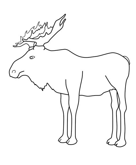 dolphin head coloring page moose head coloring canku ota book page four grig3 org