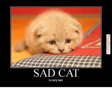 sad cat is sad www pixshark com images galleries with a bite