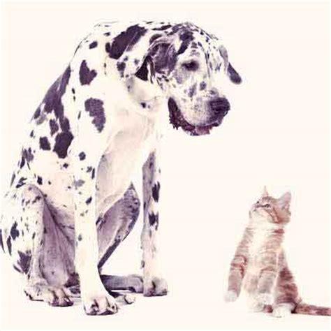 symptoms of renal failure in dogs symptoms of uti vomiting blood petcarerx