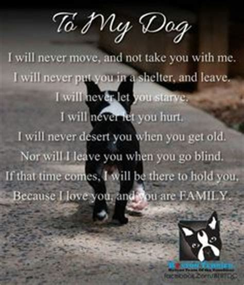 my dog is my baby | man's (and woman's) best friend