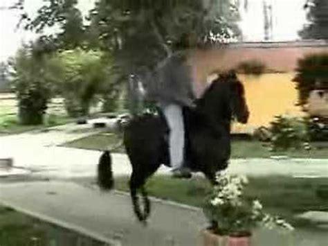 caballo de la sabana youtube tormento de la guajira paso fino colombiano 2008 rey de