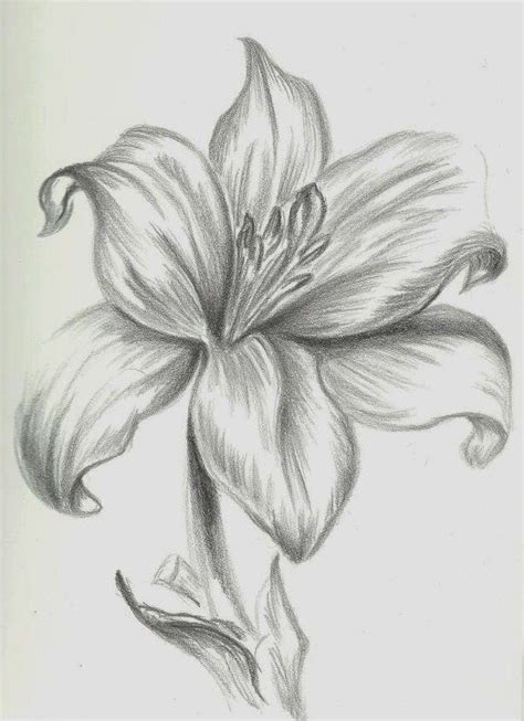 imagenes de flores sombreadas orquidea dibujo a lapiz buscar con google flores