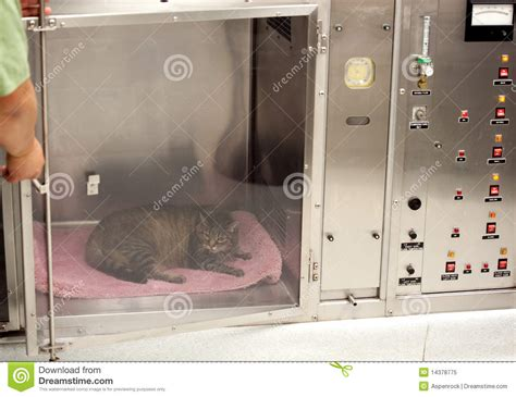 oxygen tank for dogs vet technician opens door to oxygen tank stock image image 14378775