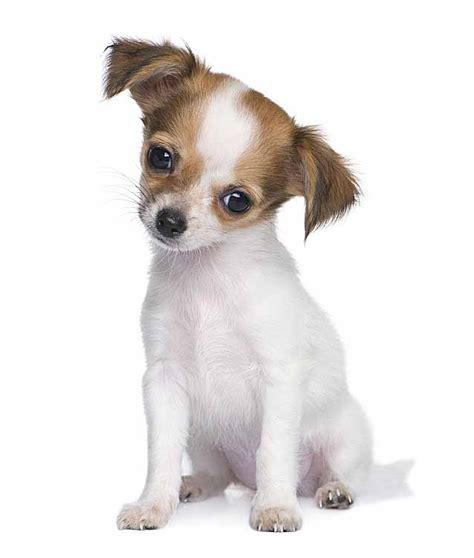 mexican puppy names mexican names for your or puppy