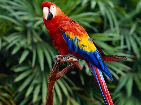 tropical forest animals and plants plant animal travel the tropical forest biome