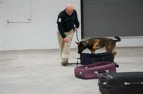 how are dogs trained to detect drugs detection detection teams atf dea certified