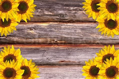 Wooden House Plans wooden lumber textured background with sunflowers