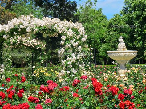 backyard rose gardens beautiful red rose garden www imgkid com the image kid