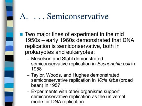 semiconservative replication involves a template what is the template ppt dna replication powerpoint presentation id 247339