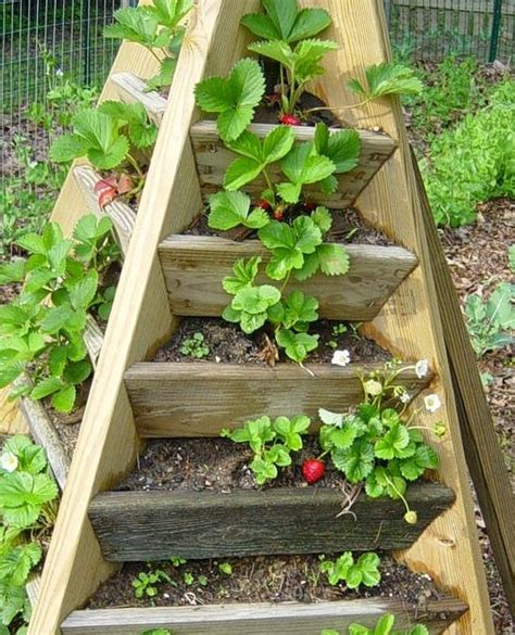 Strawberry Garden Ideas Pyramid Strawberry Tower I Want To Make This Use It For