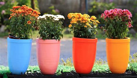 vasi in plastica colorati vasi da fiori vasi da giardino come scegliere i vasi