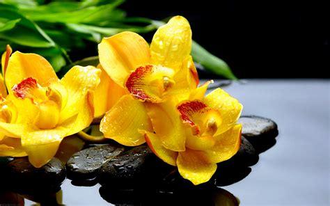 imagenes de flores zen fonds d 233 cran zen astuciosit 233 sastuciosit 233 s