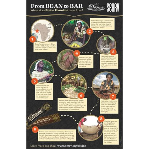 chocolate from bean to bar to s more books chocolate bean to bar poster
