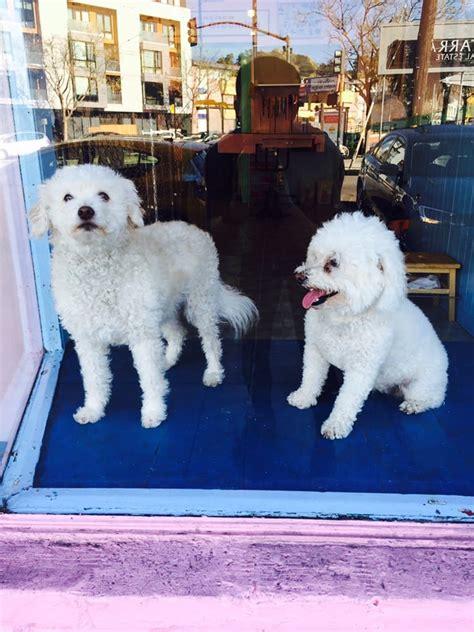grooming san francisco san francisco pet grooming 74 reviews pet groomers