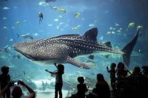 l aquarium best aquariums in the united states