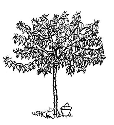 coloring pages of neem tree top view trees plans dxf sketch coloring page