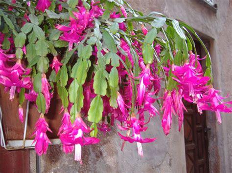 fiori senza luce cure per le succulente consigli per le piante grasse