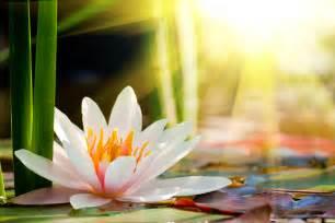 Spiritual Meaning Of Lotus Flower This Weeks The Lotus Flower Tattoonow
