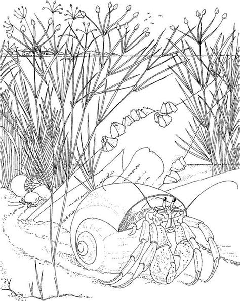 realistic underwater coloring pages realistic underwater coloring pages color bros