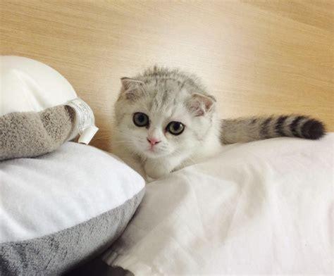 nierenkranke katze wann einschläfern 7 geheimtipps mit denen ihr eure katze gl 252 cklich macht