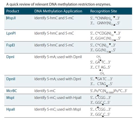 restriction pattern analysis genes dna methylation enzymes