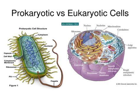 virus definition biology quizlet budding