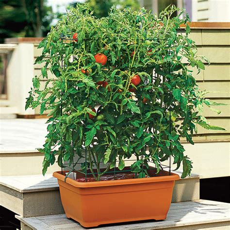 Tomatoe Planters by All In One Tomato Success Kit The Green