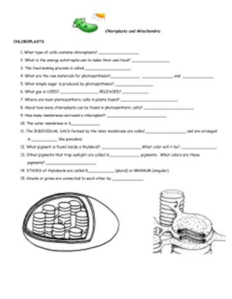Chloroplasts And Mitochondria Worksheet Answers by Chloroplasts And Mitochondria