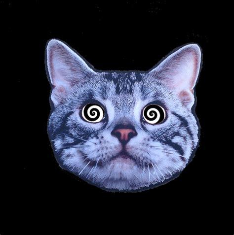 cat gif trippy acid trip gif find on giphy