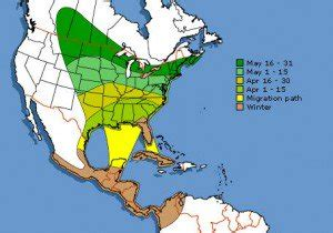 baltimore oriole migration in the southeast birds and blooms