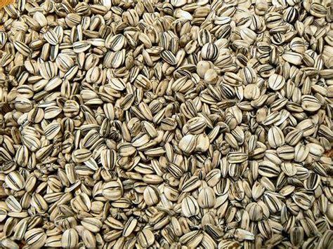 sementes de qualidade nas lavouras