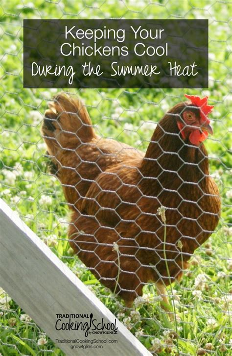 Keep Your Cing Food Cool by How To Keep Chickens Cool In Weather