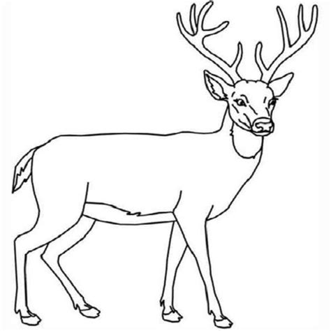 deer coloring page coloring pages deer and coloring on