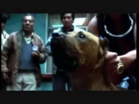 watch online amores perros 2000 full movie official trailer my amores perros trailer youtube