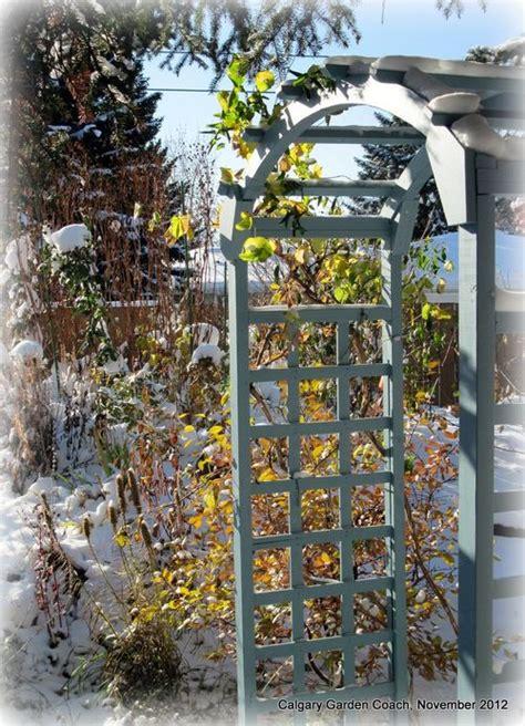Garden Arch Calgary Calgary Garden Coach My Back Shade Garden